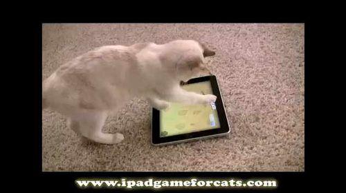 Ipad-game-cat